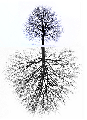 The underground network of trees